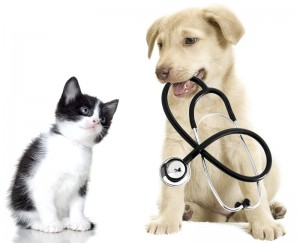 veterinary translation