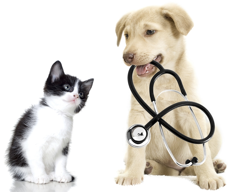 veterinary translation