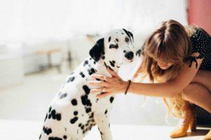 Woman Holding Adult Dalmatian