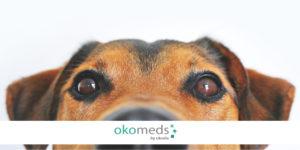 traducciones veterinarias