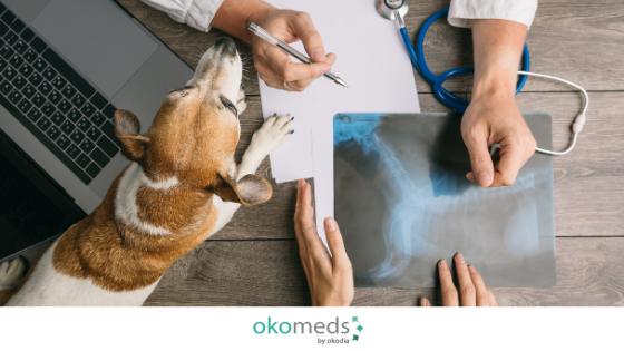 veterinary translator